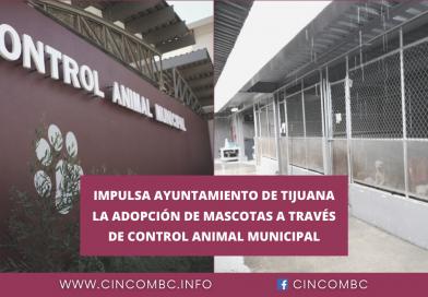 IMPULSA AYUNTAMIENTO DE TIJUANA LA ADOPCIÓN DE MASCOTAS A TRAVÉS DE CONTROL ANIMAL MUNICIPAL